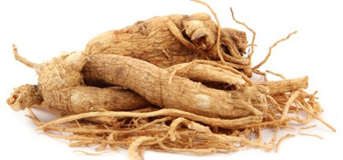 Panax Ginseng and its Benefits for the Human Body