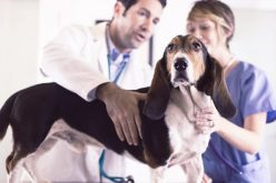 Discover the many benefits of working with a compounding veterinary pharmacy